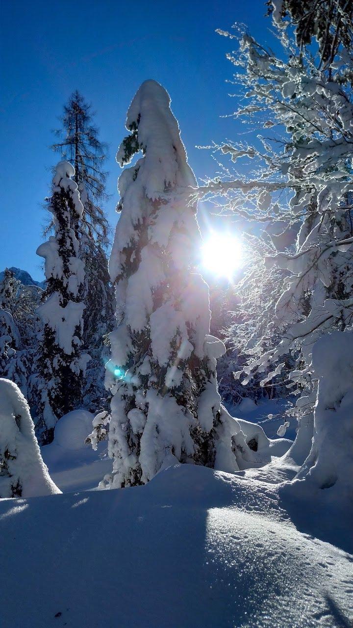 Alberi carichi di neve in Val Saisera