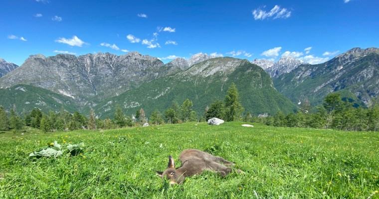 Trekking al Rifugio Pradut (1450 mt): come raggiungerlo e cosa fare