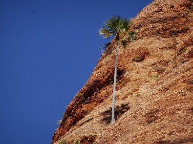 And another palm tree living on rock