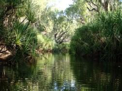 Ellenbrae's Ringers Waterhole