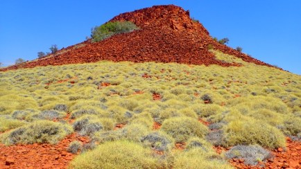 It's a world of blasted rock and needle tipped spinifex grass. Tough world
