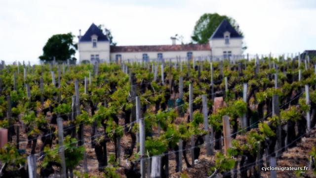 Un des nombreux vignobles et châteaux