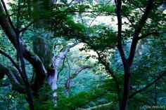 Georgia Batumi orto Botanico