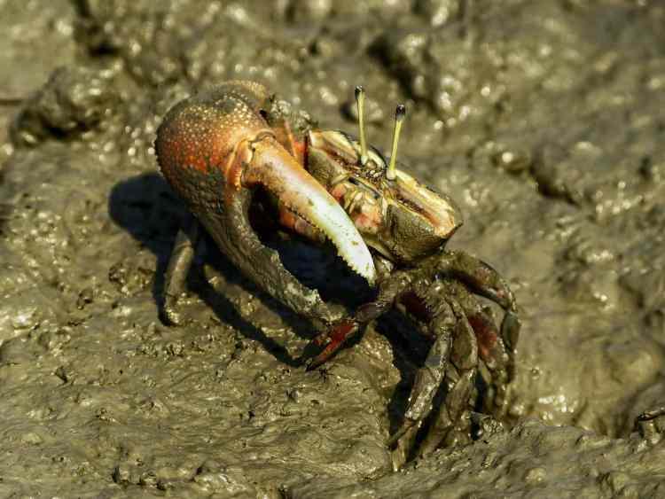 hermit crab Namhae