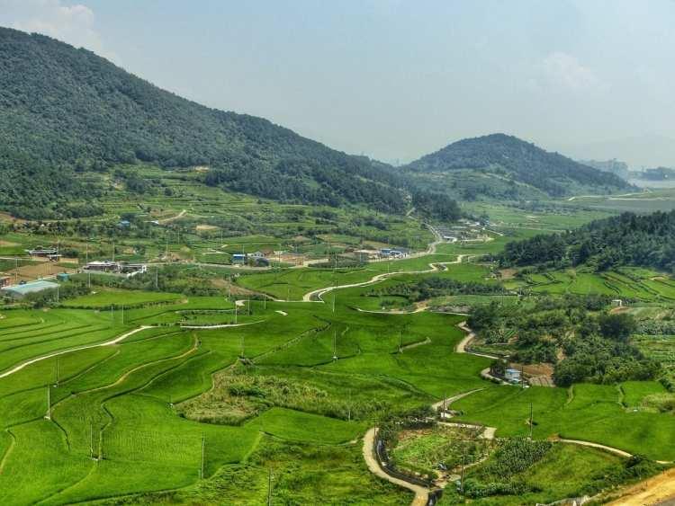 rice fields Korea