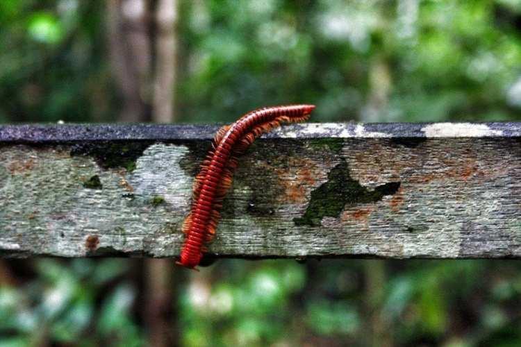 Borneo Wildlife Niah Insects