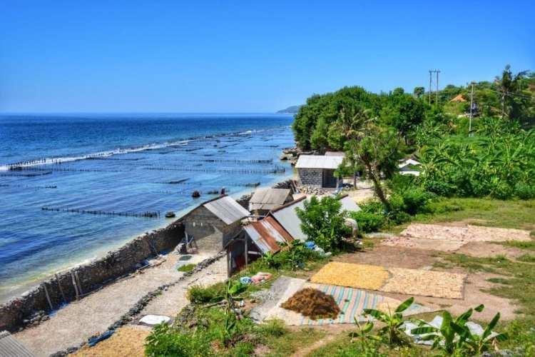 Nusa Penida travel guide