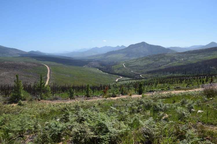 Knysna, Alfred Pass, E62, Garden Route e Port Elizabeth 25