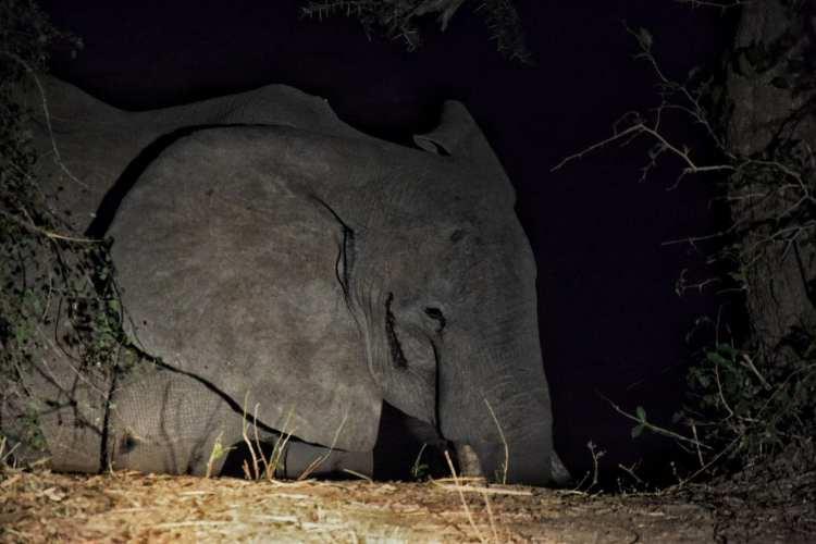 Night Safari Zambia South Luangwa
