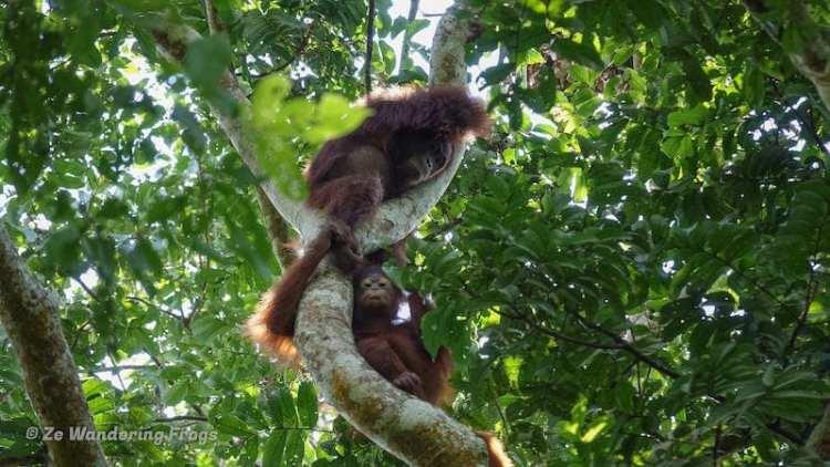 Kutai National Park
