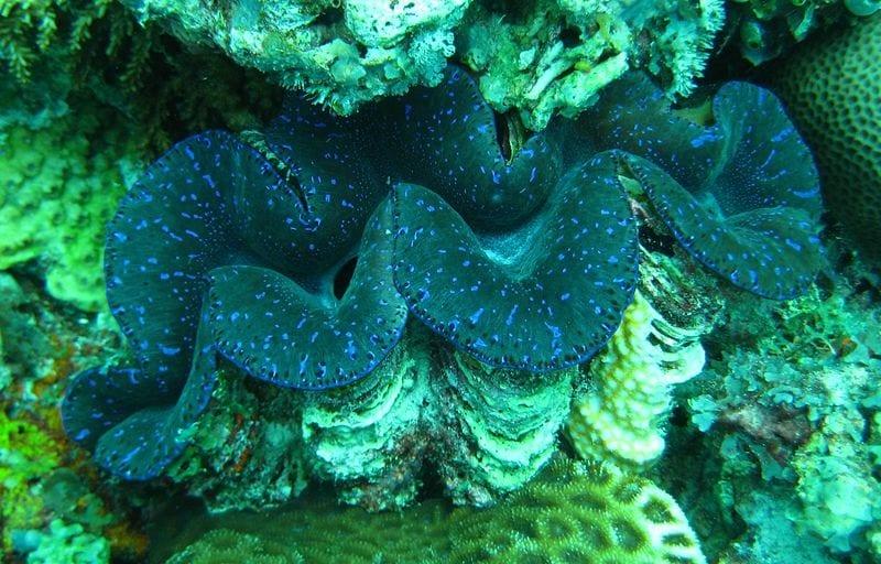 corals in zanzibar