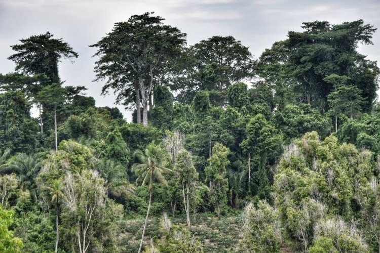 Pemba Island Trees Vegetation