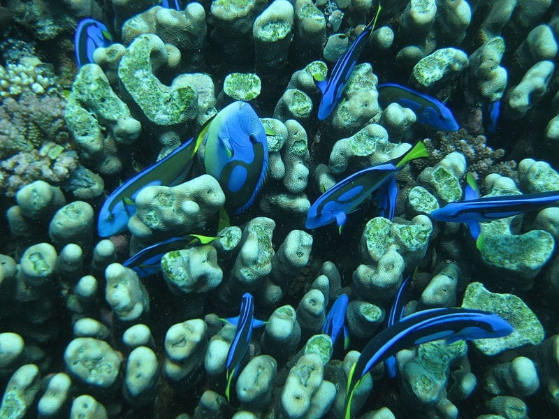 Zanzibar diving PADI