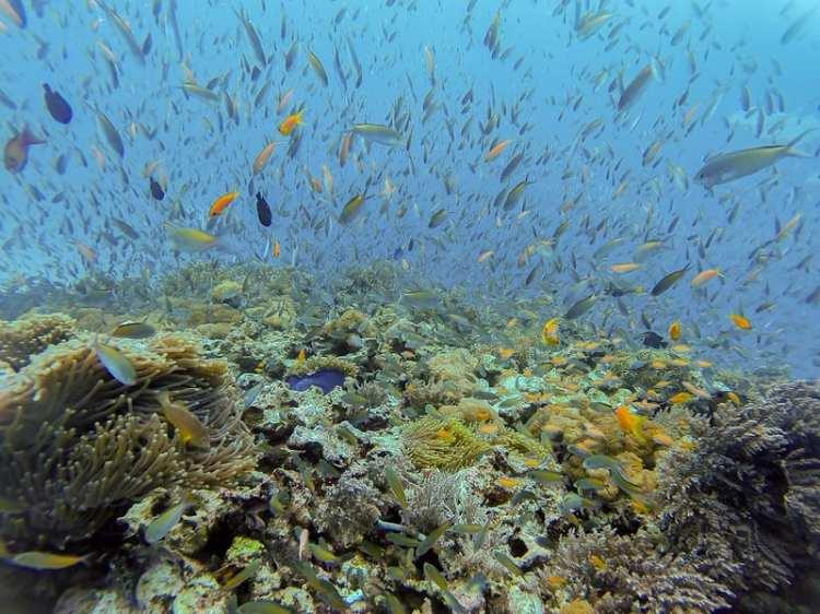 marine life fish zanzibar