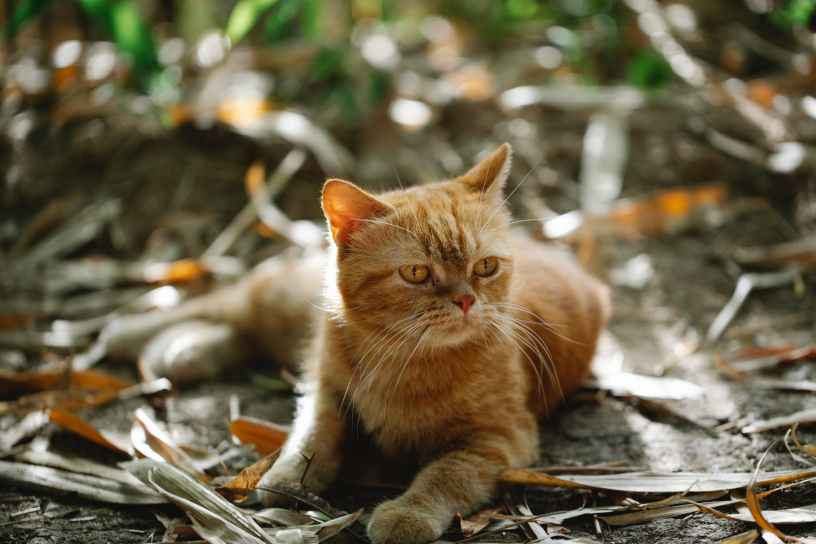 adorable cat lying on ground in autumn park