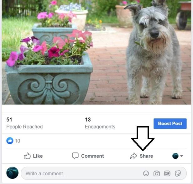 share-dog.jpg