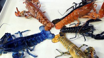colored lobsters