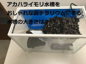 アカハライモリ水槽をおしゃれな苔テラリウムにする水槽の大きさは?