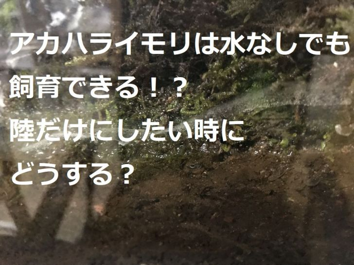 アカハライモリは水なしでも飼育できる!?陸だけにしたい時にどうする?