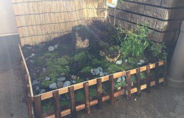 日本庭園 苔