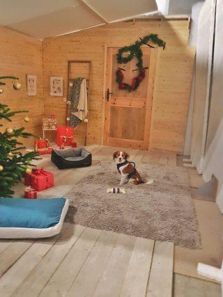 Ludie chien modèle photo shooting pro catalogue