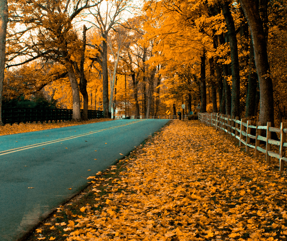 fall leaves, orange trees, road winding through the trees