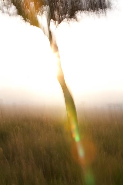 cynthia_haynes_san_diego_photographer_wanderlust_af_2012