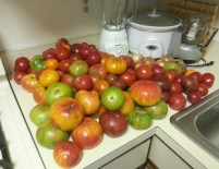 45 lbs of tomatoes on kitchen counter
