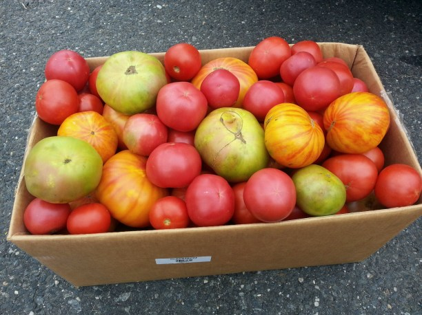 a box holding 45lbs of tomatoes