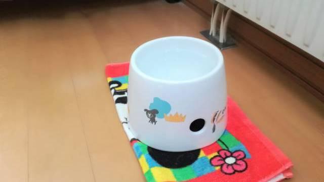 犬の水飲み場
