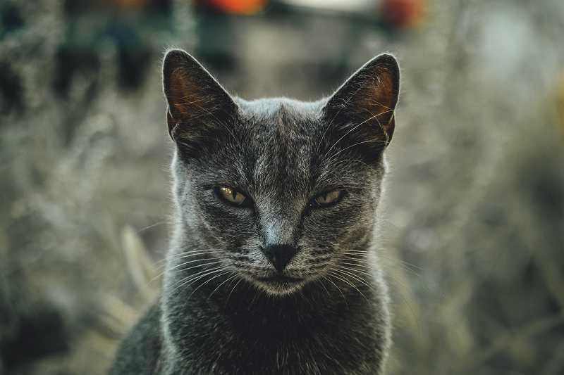 怒った顔の猫