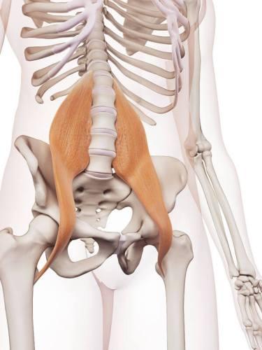 腸トレ 大腰筋