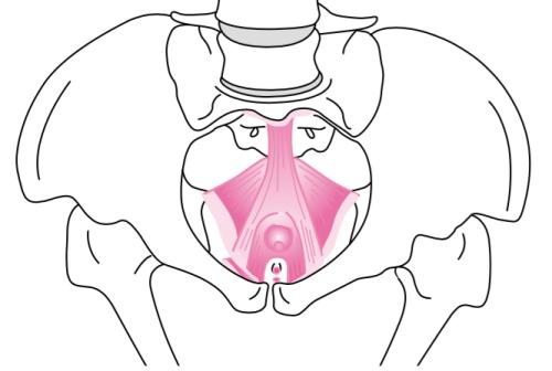 上前腸骨棘 骨盤底筋