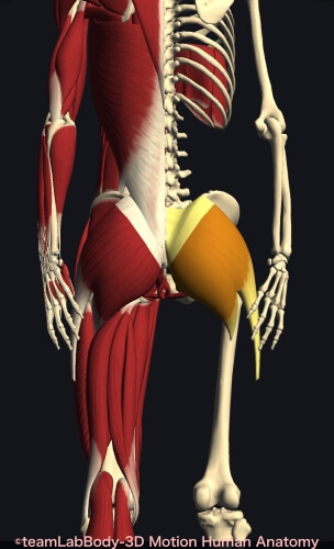 腸トレ 便秘 下痢 解消 大臀筋