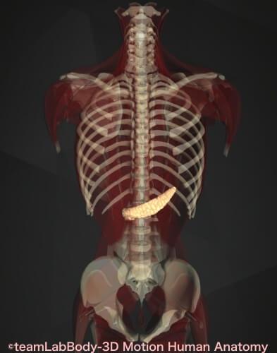 左上腹部痛み 膵臓