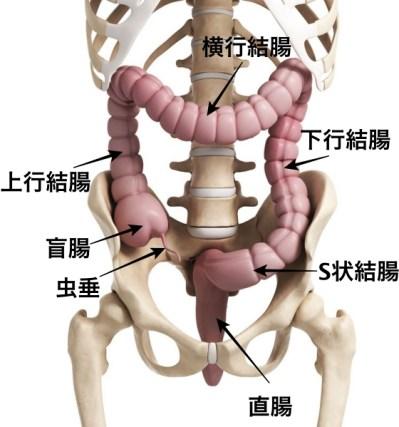 右下腹部の痛みの原因 大腸