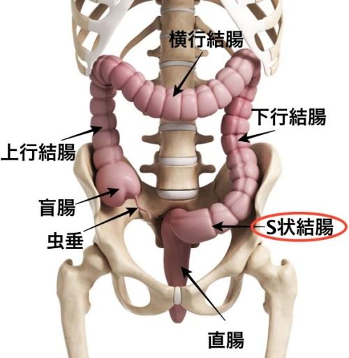大腸部位名 S状結腸