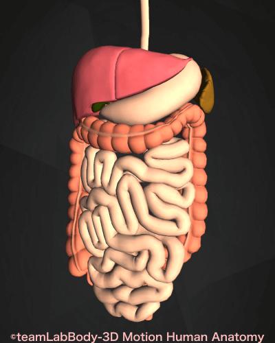 脾臓 位置図 消化器 病気