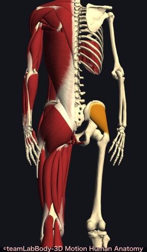 ウォーキング 筋肉痛 中臀筋