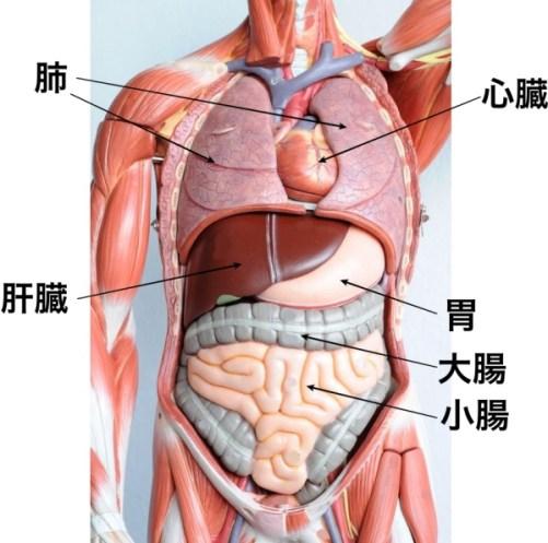 急性腹症症状CT鑑別
