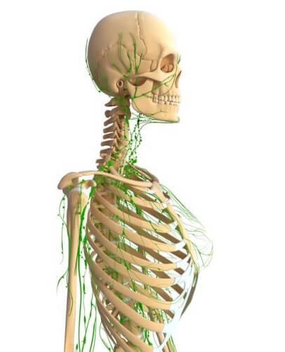 リンパ腺節場所図首