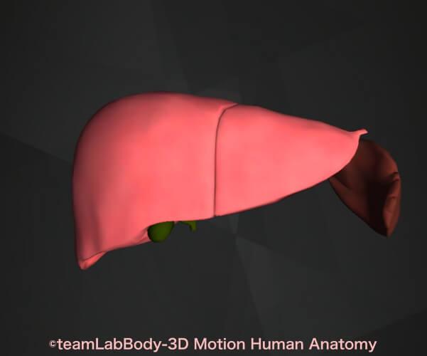 うんち緑色 肝臓脾臓