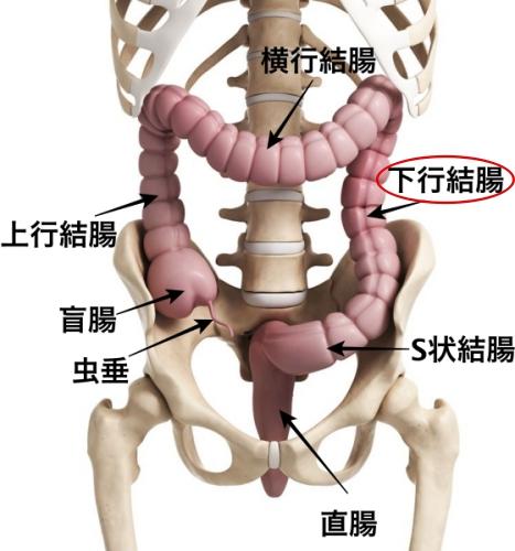 下行結腸 位置図