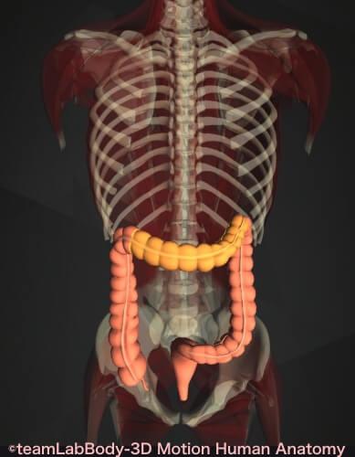 横行結腸 痛み 位置