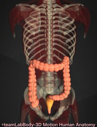 直腸 場所 図 どこ 画像