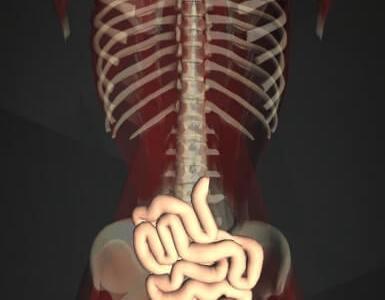 回腸の位置を図で解説!栄養を吸収する働きなどの機能がある