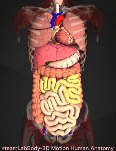 空腸 内臓 位置 図 働き