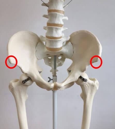 上前腸骨棘 場所 図 画像