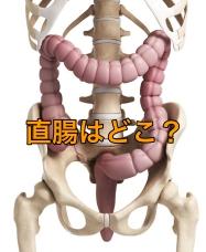直腸の場所を図で解説!その働きや長さ、形について