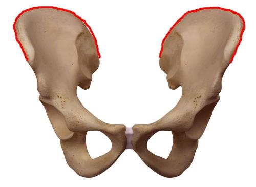 腸骨稜の場所 図